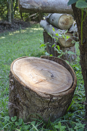 Sunlight beating on cut tree trunk with nature in background Stock Photo