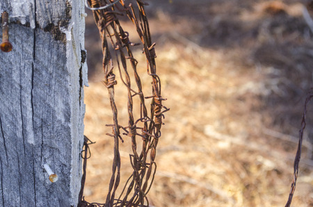 Rolled barbed wire stuck in wood