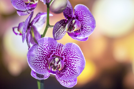Orchid with background lights