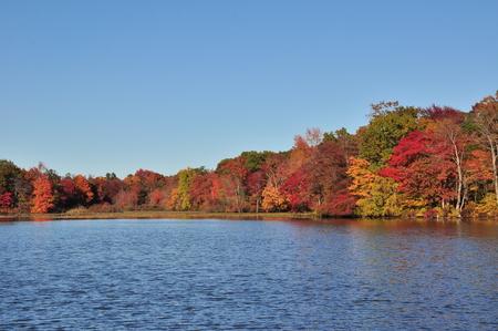 new jersey: New Jersey lake, foliage under autumn sun