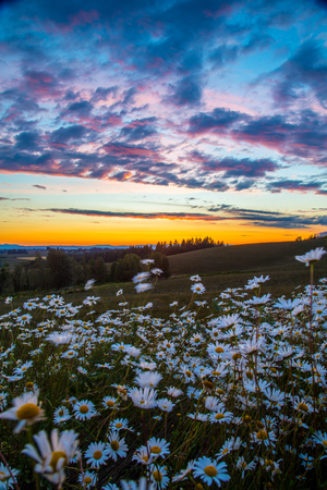 Willamette Valley Sunset with flowers