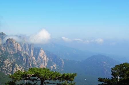 arbres: Montagne corse
