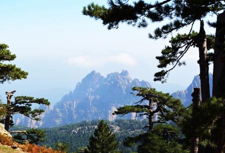 arbres: Montagne corse 2