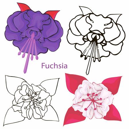 fuchsia: flores fucsias contornos de flores sobre un fondo blanco