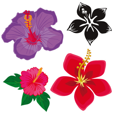 floret: hibiscus flowers. flowers on a white background. Illustration