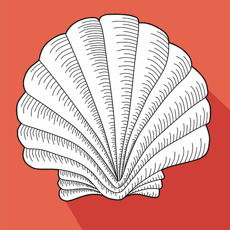 cockleshell: Sea shell. Line work. White cockleshell on a salmon background. Illustration