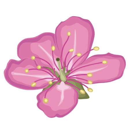 Pink cherry blossoms. Coloring book. Stock illustration. Isolated image on white background.