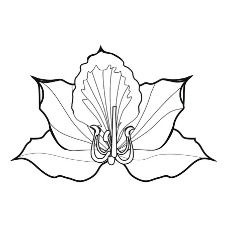 Bauhinia blossoms. Coloring book. Stock illustration. Isolated image on white background. Symbol of Hong Kong.