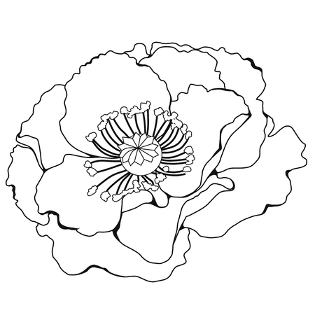 Poppy blossoms. Coloring book. Stock illustration. Isolated image on white background.