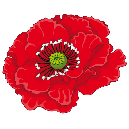 Red poppy blossoms. Stock illustration. Isolated image on white background. The symbol of memory.