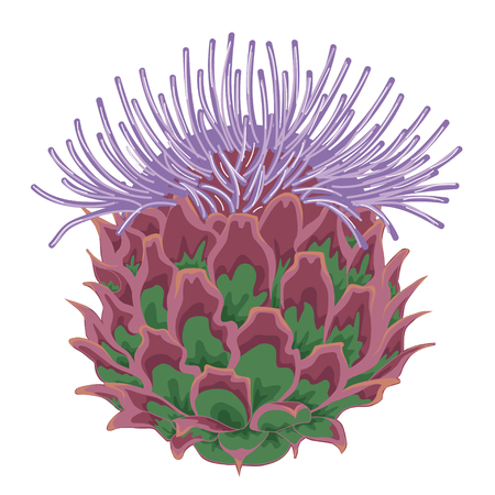 Lilac thistle blossoms. Stock illustration. Isolated image on white background.