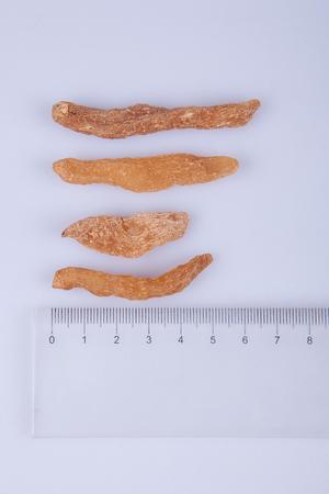 blume: Measure the length of Gastrodia elata Blume