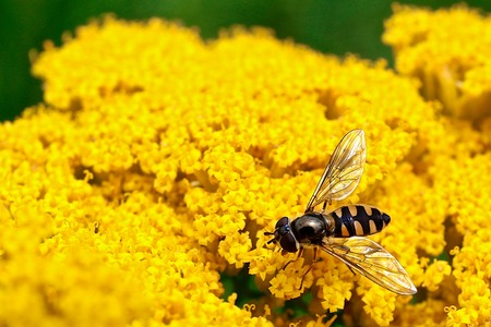 botanical gardens: Macro Insect on the botanical gardens Stock Photo