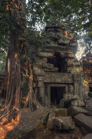 Photo of the Ta Prohm temple in Siem Reap Cambodia 스톡 콘텐츠