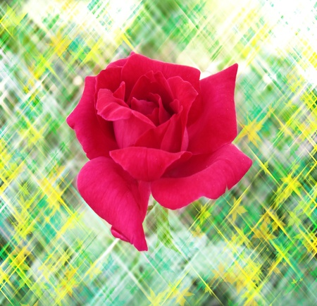 Stunning pink rose in colorful background photo