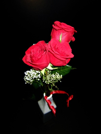 Blooming Red roses  photo
