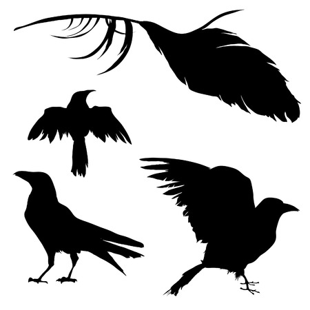 depress: Vector silhouette set of a crow, raven, bird, and feather.