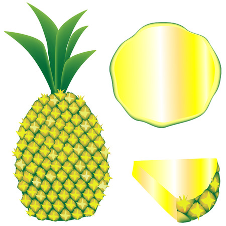 Textured vector illustration of a whole pineapple, slice, and wedge Ilustração