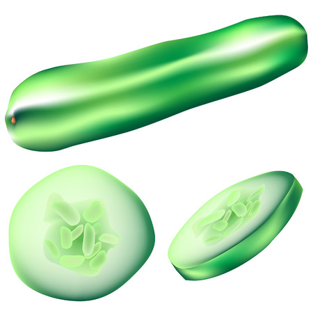 Textured vector illustration of a whole cucumber, slice, and wedge Vector