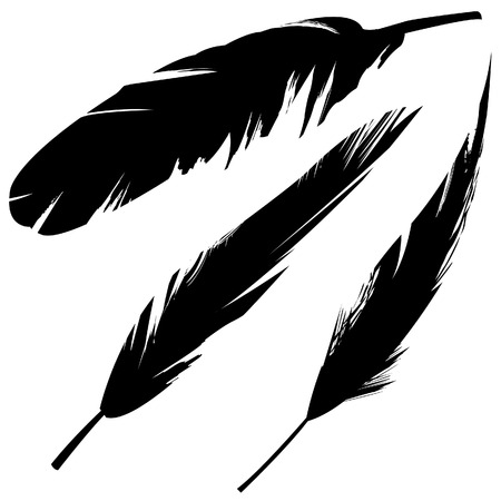 Vector illustrations of various bird feathers in grunge style.