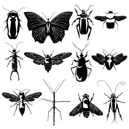 Insect and bug collection in detailed vector silhouette Vector