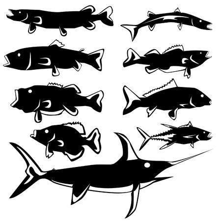 peces de agua salada: Peces de agua dulce y agua salada en el vector de silueta estilizada con ilustraci�n Vectores