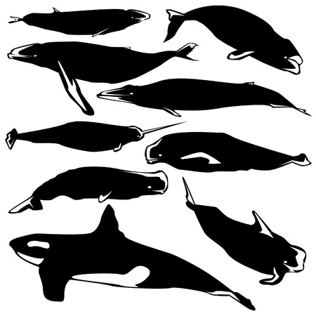 migrate: Graceful whales in vector silhouette with stylized illustration
