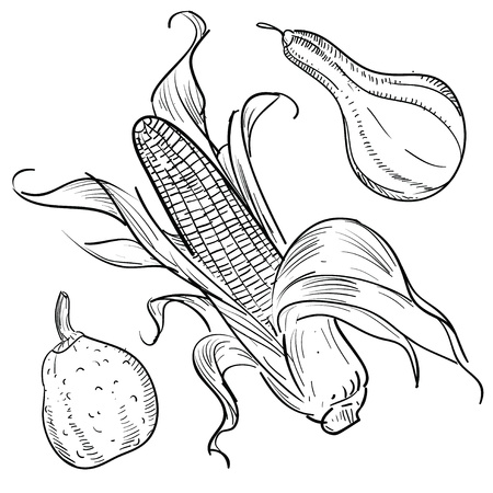 maize: Doodle style autumn harvest or thanksgiving vector illustration Illustration