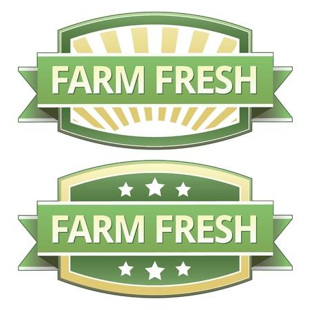 노란색과 녹색 식품 라벨, 스티커, 단추 또는 포장, 인쇄, 광고, 웹 사이트에서 사용하기 위해 아이콘 농장 신선한. 일러스트