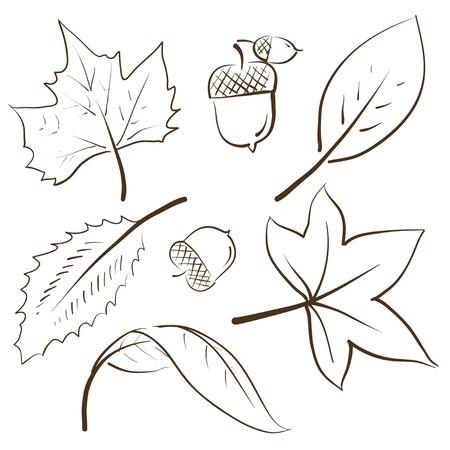 feuille de vigne: Doodle illustration vectorielle de style automne avec les feuilles et les glands Banque d'images