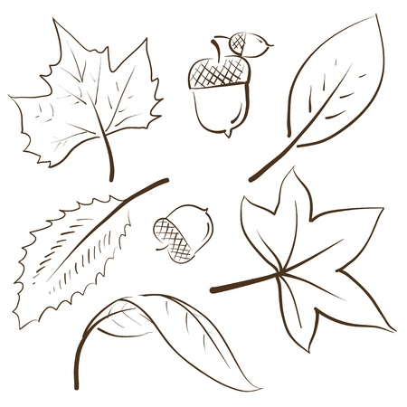 buckeye seed: Doodle style autumn vector illustration with leaves and acorns Stock Photo