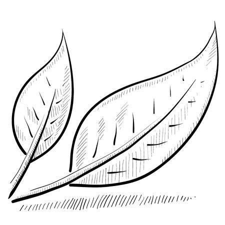 Doodle style leaf or nature vector illustration Stock Illustration - 11575049