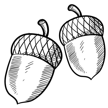 Doodle style acorn or buckeye illustration suitable for web, print, or advertising use.