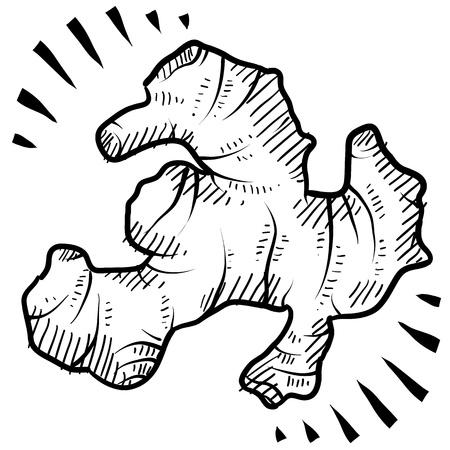 Doodle style fresh ginger root illustration