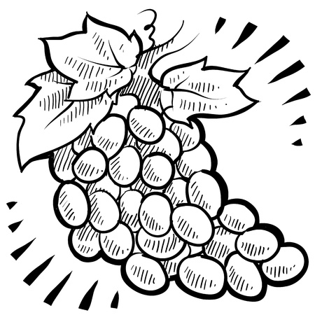 Doodle style fresh, juicy bunch of grapes illustration