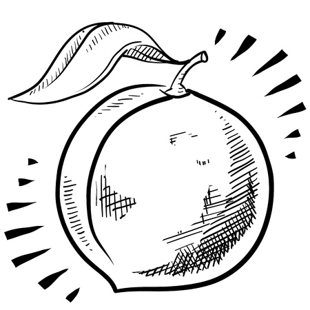 복숭아: 낙서 스타일의 신선한, 수분이 많은 복숭아 그림