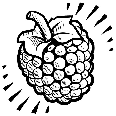 Doodle style fresh, juicy raspberry illustration