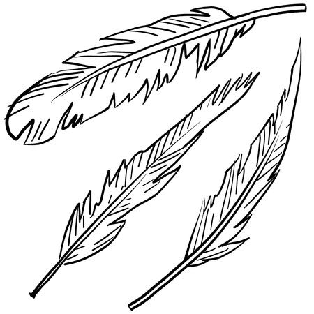 magpie: Doodle style bird feathers illustration in vector format