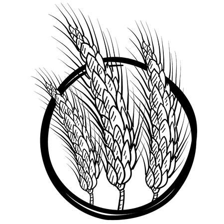 sheaf: Gavilla de estilo de dibujo de la ilustraci�n de trigo en formato vectorial Vectores