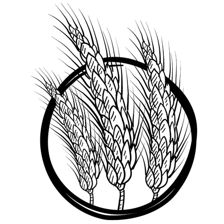 wheat illustration: Stile fascio Doodle di illustrazione di grano in formato vettoriale Vettoriali