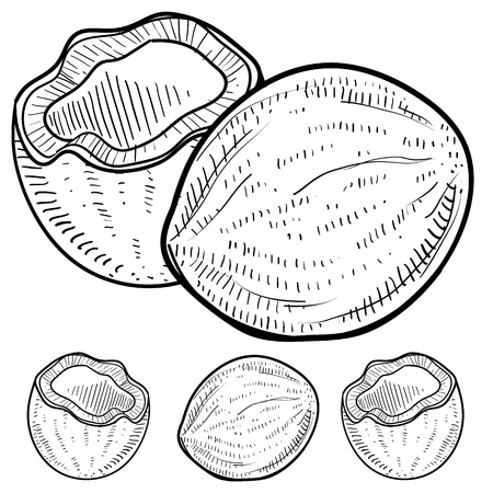 Doodle style coconut illustration in vector format  Set includes exterior and interior views of whole and cracked cocoanuts   Vector