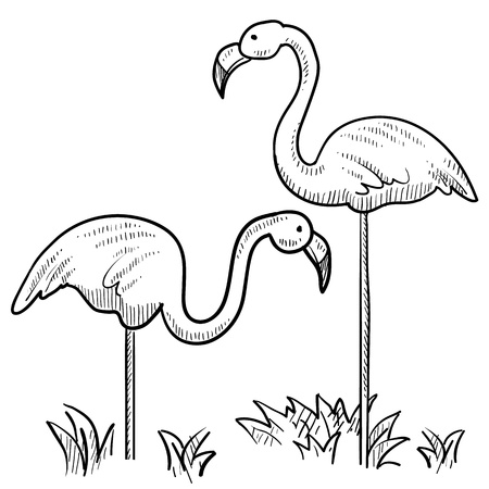 marsh: Doodle style sketch of two flamingo birds standing in the grass in illustration