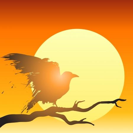 corvo imperiale: Raven o corvo appollaiato su un albero di fronte al sole al tramonto nella figura Vettoriali