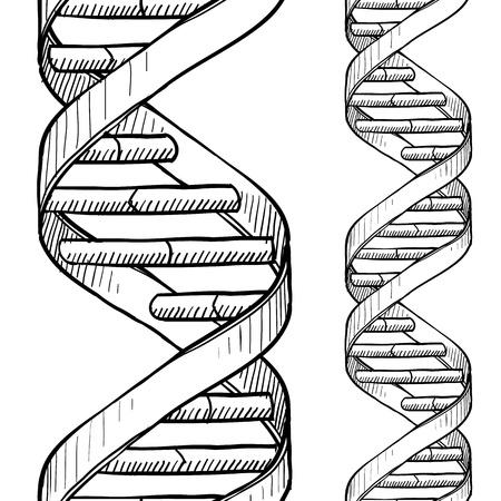 DNA の二重らせんのシームレスなベクトルの背景のスタイルまたは枠線を落書き 写真素材