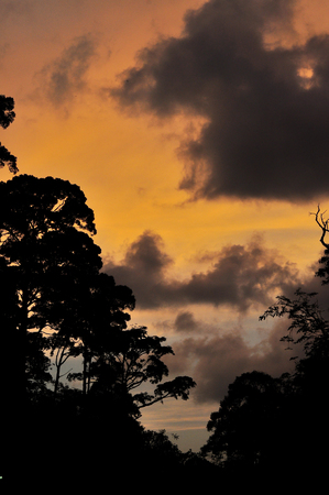 Silhouette of trees and clouds behind the yellow sky at twilight