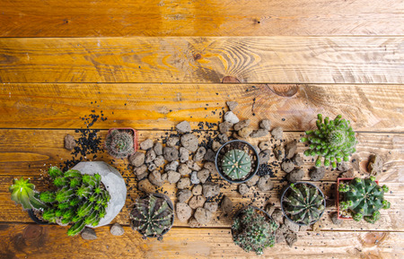 Cactus variety and size in pots With planting materials. All are laid on a vintage brown wood floor. Reklamní fotografie - 120780767