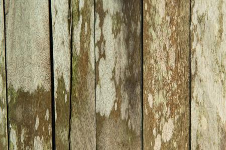 Full frame image of old wood flooring on the mold and moss. Reklamní fotografie - 120780846