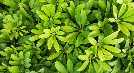 Full frame image of green finger leaves with full water droplets. Reklamní fotografie