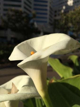 City flower Stock Photo