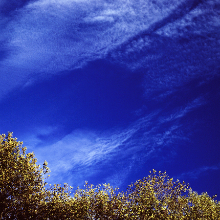 yellow trees: Blue sky over the yellow trees Stock Photo